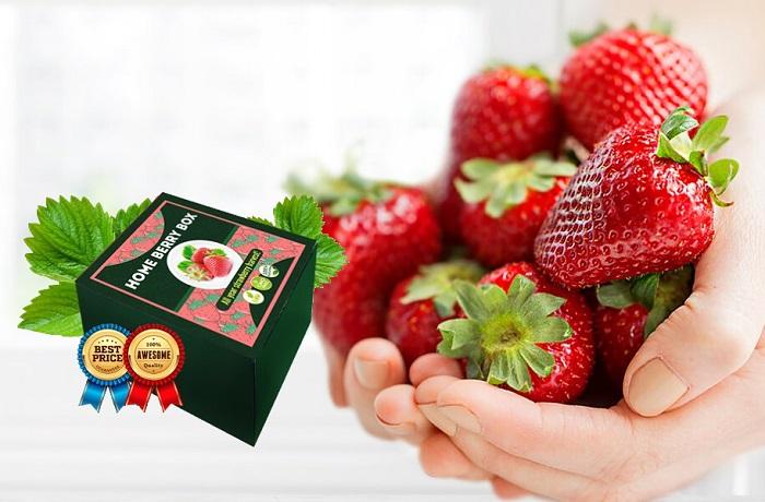 HOME BERRY BOX домашни ягоди: невероятна реколта от едра и вкусна ягода  ВЕЧЕ СЛЕД 1 МЕСЕЦ!
